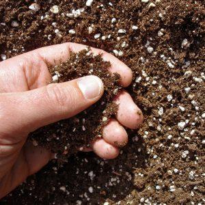 Hand of a gardener sampling soil before planting.